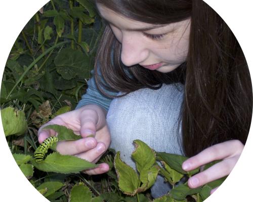 Student examining caterpillar