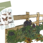 pollinator guide cover superimposed over painting of fencerow planting